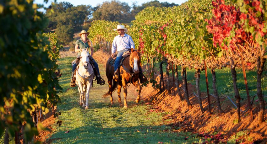 vineyard riding