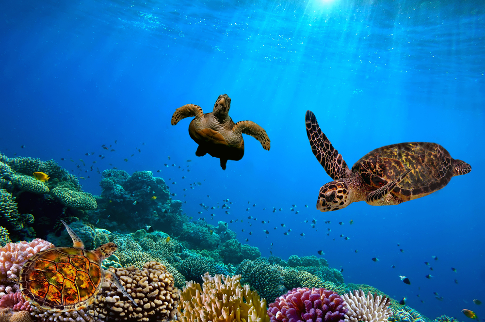 underwater adventure in barbados