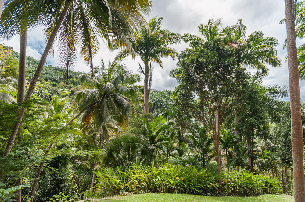 tropical forest in barbados