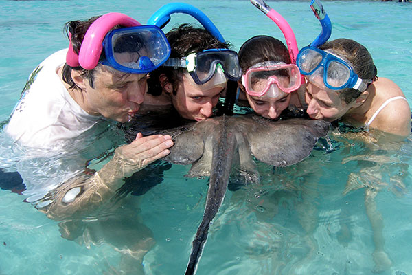 interacting with stingrays in antigua