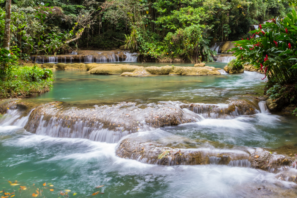 jungle river in Jamaica