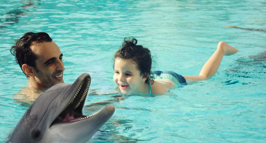father and daughter swimming with dolphins in dubai