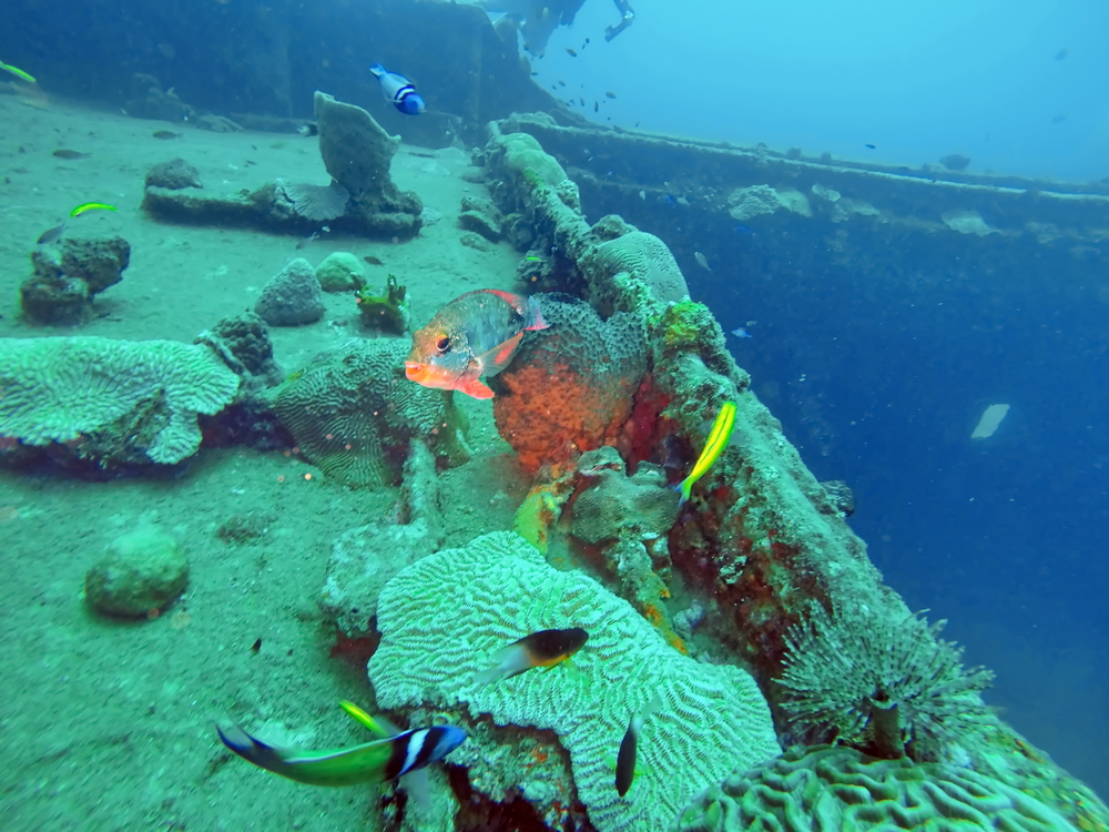 scuba diving st lucia
