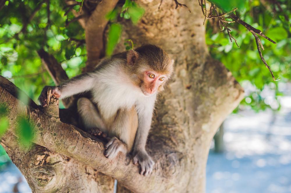 Monkey Island of Homosassa