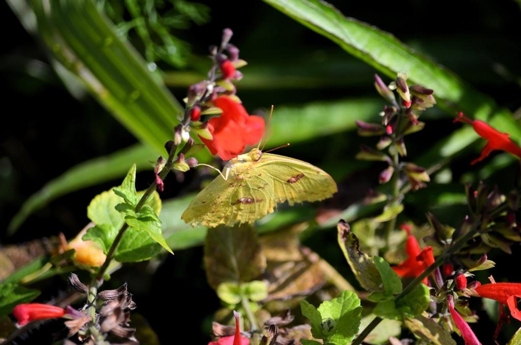 garden in orlando